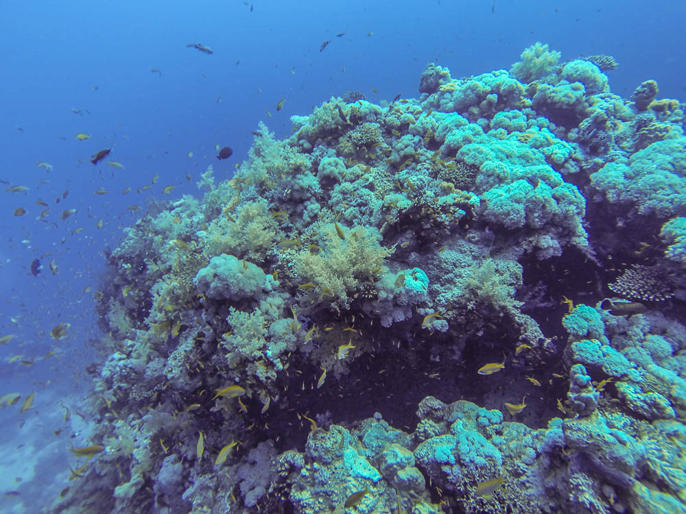 Korallenblock in Hurghada Ägypten - fotografiert mit der GoPro