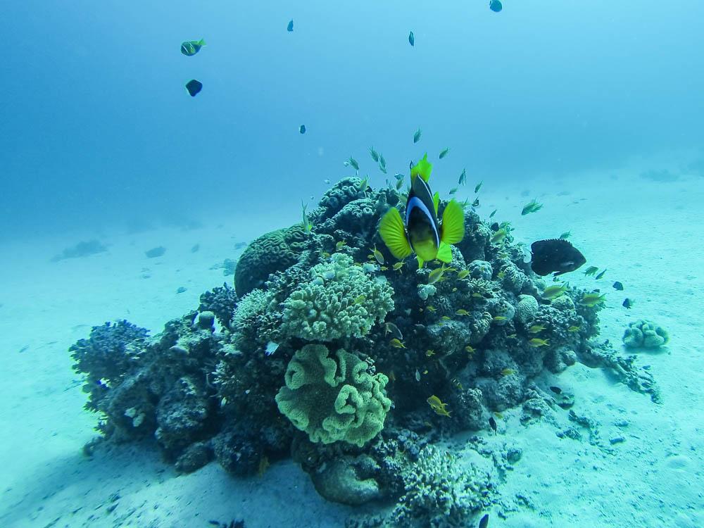 Clownsfisch mit der GoPro fotografiert